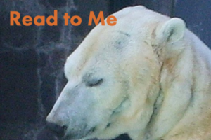 Polar Bear with Read to Me text
